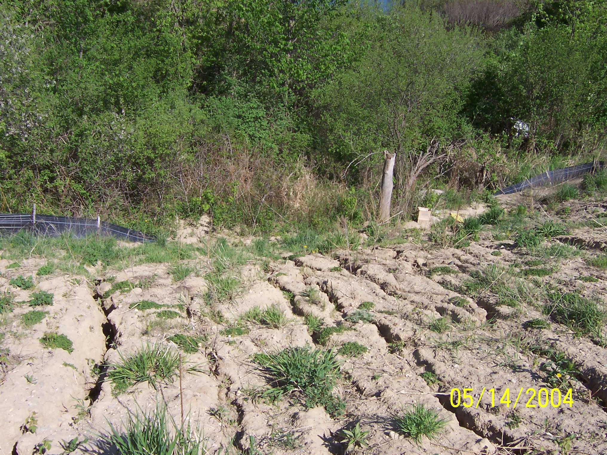 erosion prevention practices - temporary seeding and stabilization