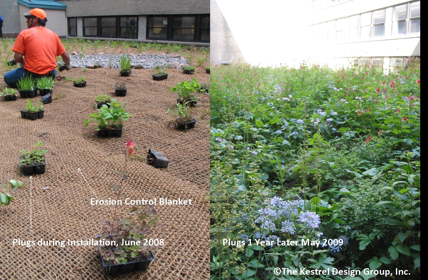 Design criteria for green roofs - Minnesota Stormwater Manual