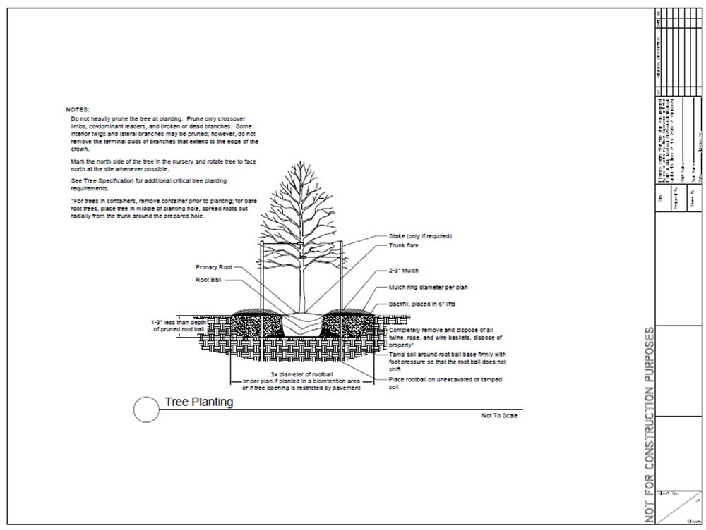 Tree trenches and tree boxes combined - Minnesota Stormwater Manual