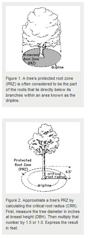 schematic showing protected root zone