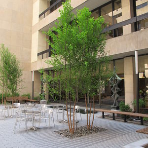 photo of Pace University tree system