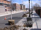 photo of trees prior to planting for the Light Rail project, St. Paul, MN