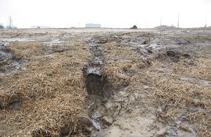 image of failed mulch application