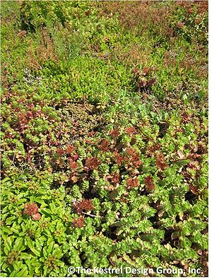Plant Lists For Green Roofs Minnesota Stormwater Manual