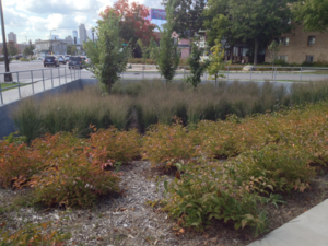 This picture shows a finished basin with simple groupings of shrubs grasses and trees