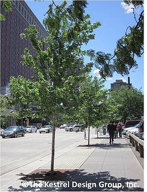 photo of trees on marquette Avenue