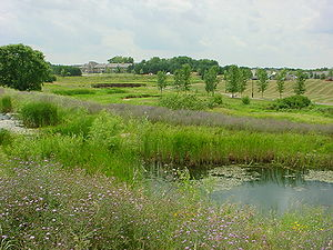 This photo shows an example of a stormwater wetland
