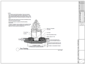 tree planting detail schematic