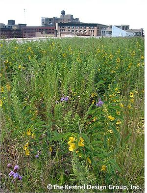Green Roofs Combined Minnesota Stormwater Manual