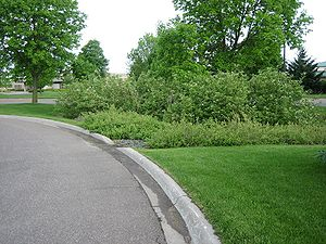photo showing a rain garden in a residential area