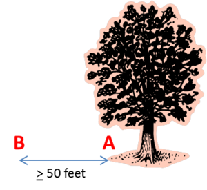schematic showing where to assess trees