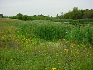 This photo shows a an example of a stormwater wetland