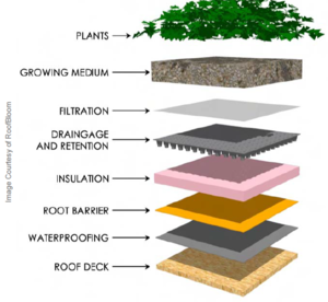This image shows cross-section of a typical green roof